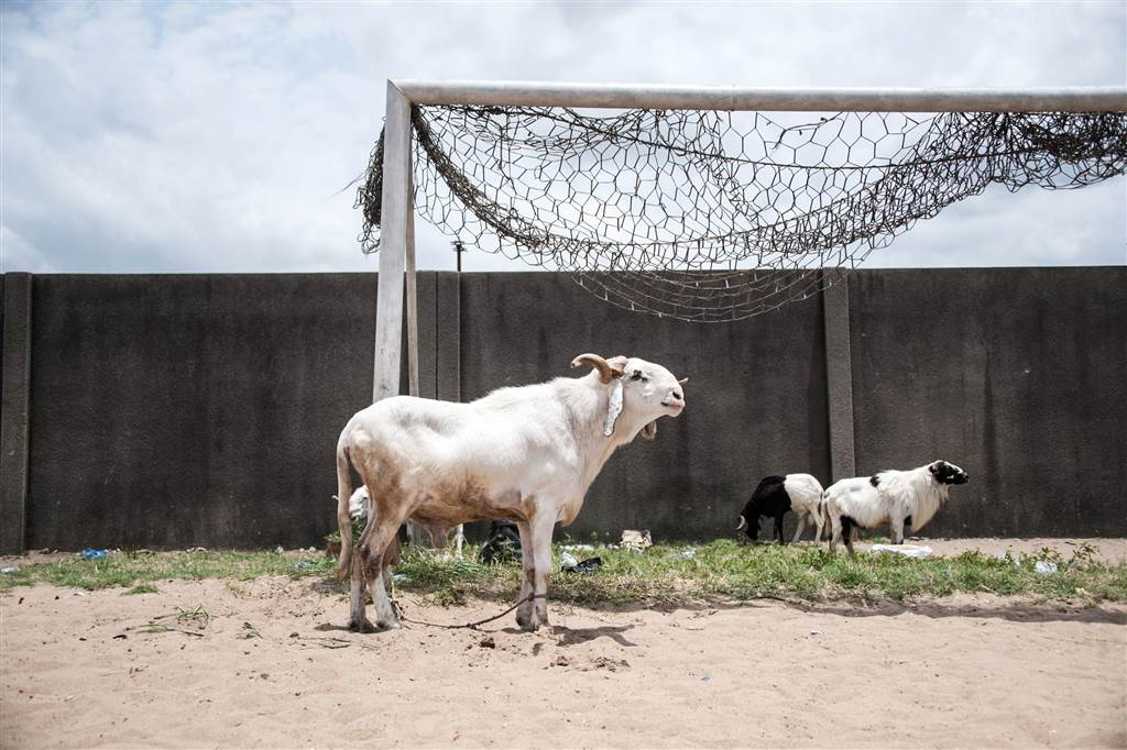A ram stands tied to a goal post ahead of a ram fighting competition held at the National Stadium in Lagos, Nigeria on March 20, 2016. STEFAN HEUNIS / AFP - Getty Images