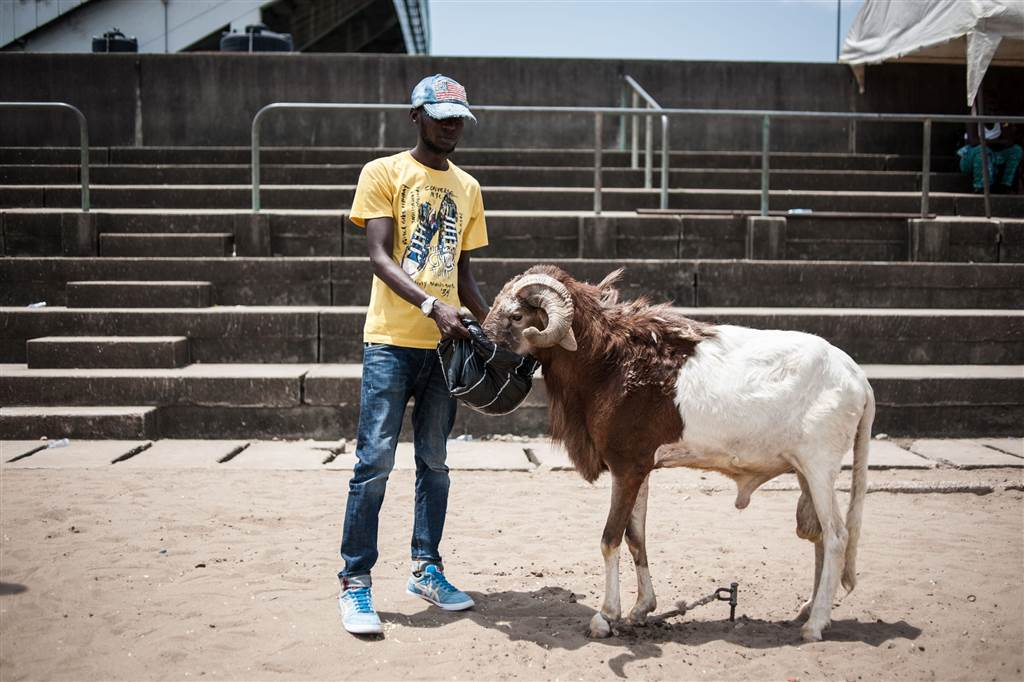 A Nigerian feeds a ram before it takes participation in a fighting competition at the National Stadium in Lagos on March 20, 2016. STEFAN HEUNIS / AFP - Getty Images